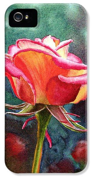 Rose iPhone 5s Case - Morning Rose by Irina Sztukowski