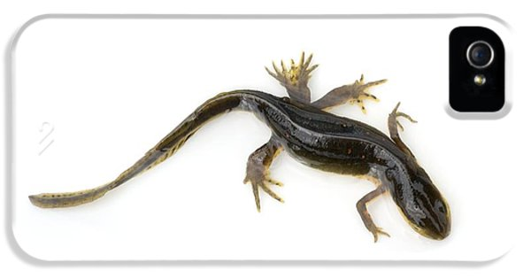 Mutated Eastern Newt IPhone 5s Case by Lawrence Lawry