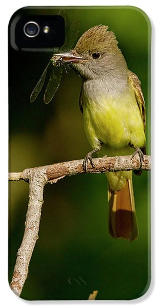 Flycatcher iPhone 5s Case - North America, Usa, Central by Joe and Mary Ann Mcdonald