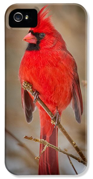 Northern Cardinal IPhone 5s Case by Bill Wakeley