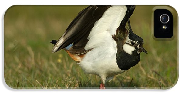 Lapwing iPhone 5s Case - Northern Lapwing by Helmut Pieper