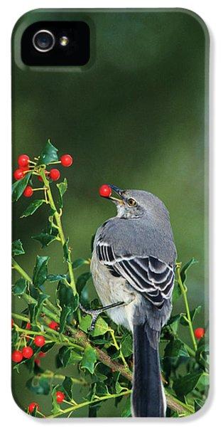 Northern Mockingbird (mimus Polyglottos IPhone 5s Case