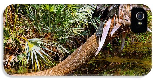 Oriental Darter Anhinga Melanogaster IPhone 5s Case