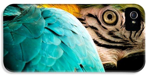 Macaw iPhone 5s Case - Sleeping Beauty by Karen Wiles
