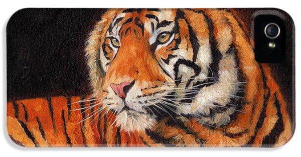 Sumatran Tiger  IPhone 5s Case by David Stribbling