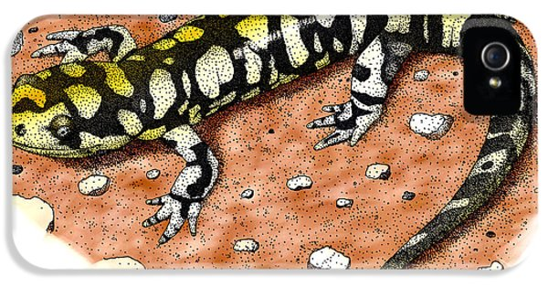 Tiger Salamander IPhone 5s Case by Roger Hall