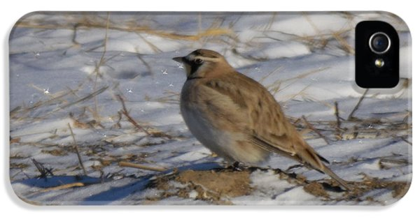 Winter Bird IPhone 5s Case by Jeff Swan