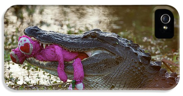 Anhinga iPhone 5s Case - Usa, Florida, Everglades National Park by Jaynes Gallery