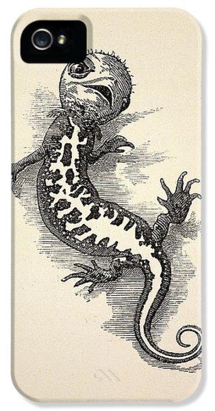 1863 Kingsley Waterbabies Human Newt IPhone 5s Case by Paul D Stewart