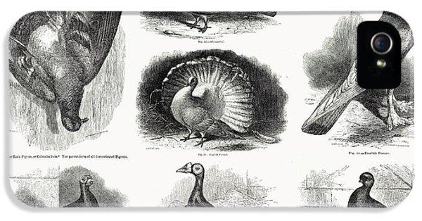 1868 Darwin Pigeon Breeds Illustration IPhone 5s Case by Paul D Stewart