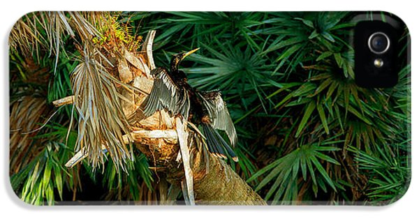 Anhinga Anhinga Anhinga On A Tree IPhone 5s Case