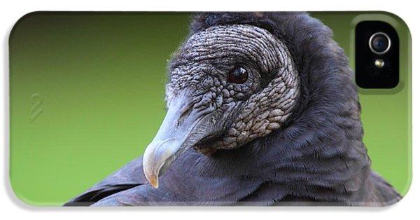 Black Vulture Portrait IPhone 5s Case by Bruce J Robinson