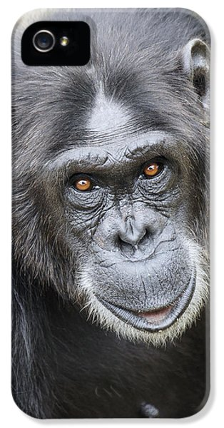 Chimpanzee Portrait Ol Pejeta IPhone 5s Case by Hiroya Minakuchi