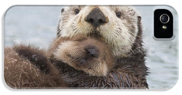 Female Sea Otter Holding Newborn Pup IPhone 5s Case