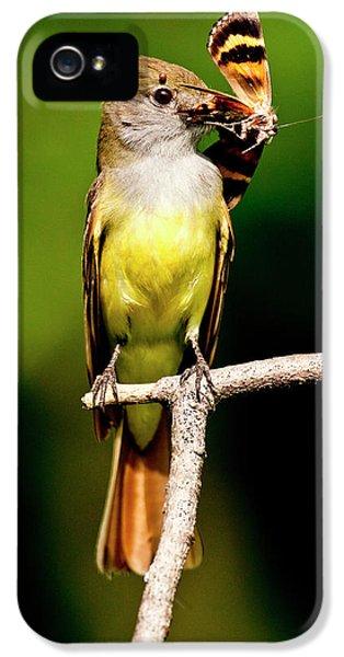 Flycatcher iPhone 5s Case - Great Crested Flycatcher Myiarchus by David Northcott