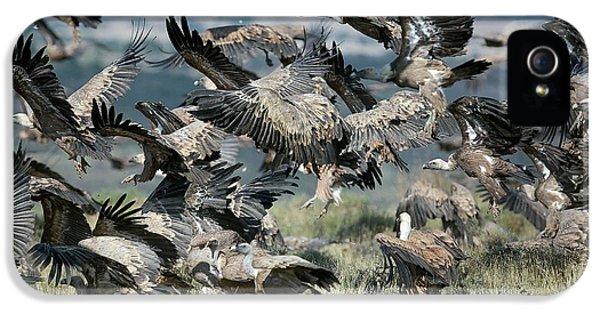 Griffon Vultures IPhone 5s Case
