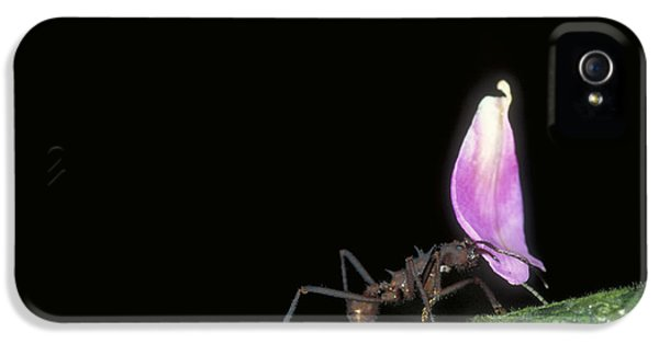 Leafcutter Ant IPhone 5s Case by Gregory G. Dimijian