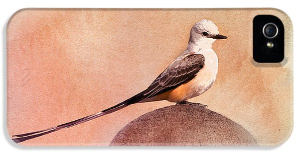 Flycatcher iPhone 5s Case - Scissor-tailed Flycatcher by Betty LaRue