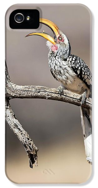 Hornbill iPhone 5s Case - Southern Yellow-billed Hornbill by Tony Camacho
