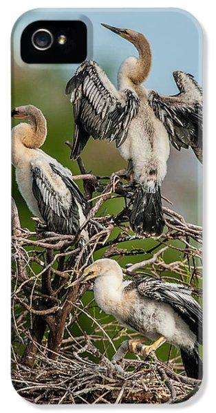Anhinga iPhone 5s Case - Usa, Florida, Green Cay, Wakodahatchee by Jaynes Gallery