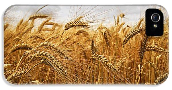 Wheat IPhone 5s Case by Elena Elisseeva