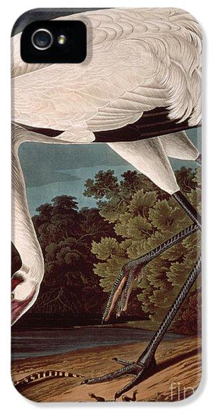 Whooping Crane IPhone 5s Case by John James Audubon