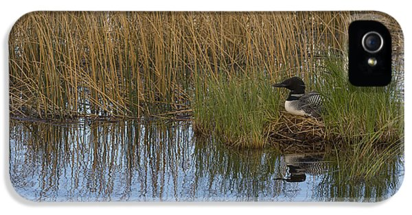 Common Loon Gavia Immer, Canada IPhone 5s Case