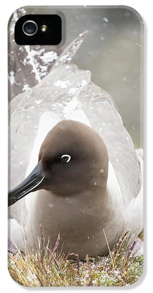 Albatross iPhone 5s Case - A Light Mantled Albatross by Ashley Cooper