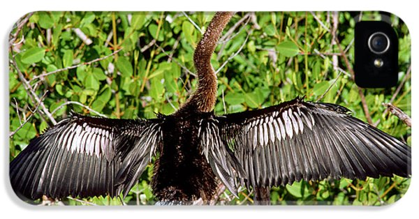 Anhinga Anhinga Anhinga Drying Plumage IPhone 5s Case
