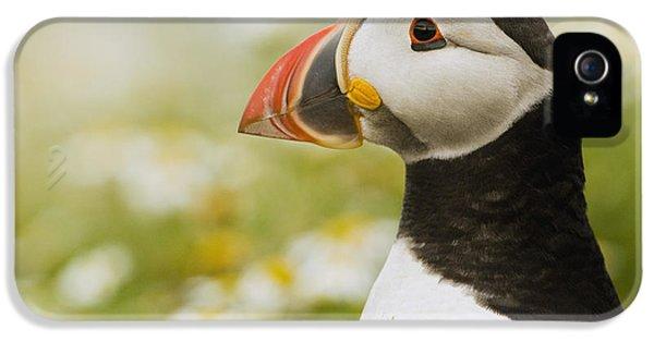 Atlantic Puffin In Breeding Plumage IPhone 5s Case by Sebastian Kennerknecht