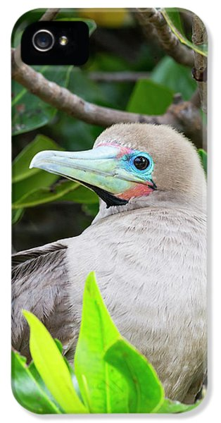 Ecuador, Galapagos Islands, Genovesa IPhone 5s Case