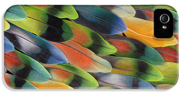 Lovebird iPhone 5s Case - Lovebird Tail Feather Pattern And Design by Darrell Gulin