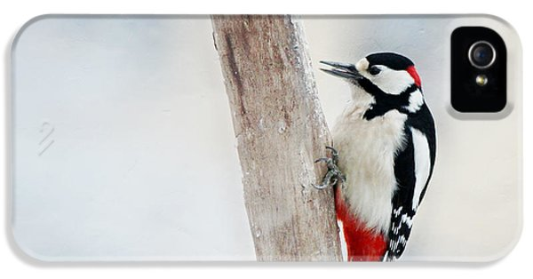Woodpecker IPhone 5s Case