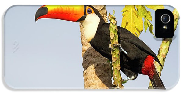Brazil, Mato Grosso, The Pantanal, Toco IPhone 5s Case