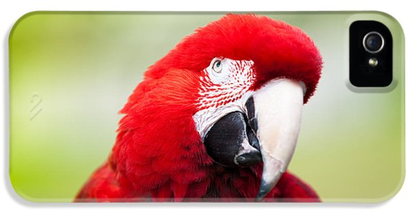 Parrot IPhone 5s Case by Sebastian Musial