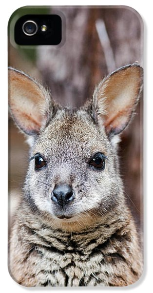Tammar Wallaby (macropus Eugenii IPhone 5s Case by Martin Zwick