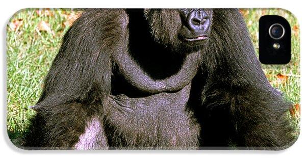 Adult Male Western Lowland Gorilla IPhone 5s Case