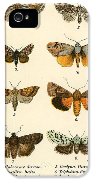 Butterfly iPhone 5s Case - Butterflies by English School
