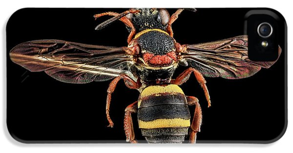 Cuckoo iPhone 5s Case - Cuckoo Bee by Us Geological Survey