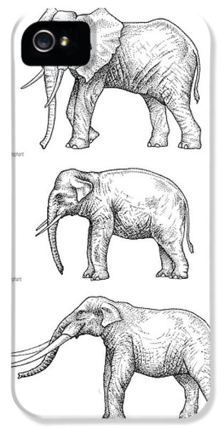 Elephant Evolution, Artwork IPhone 5s Case by Gary Hincks