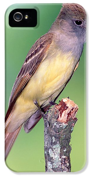 Great Crested Flycatcher IPhone 5s Case
