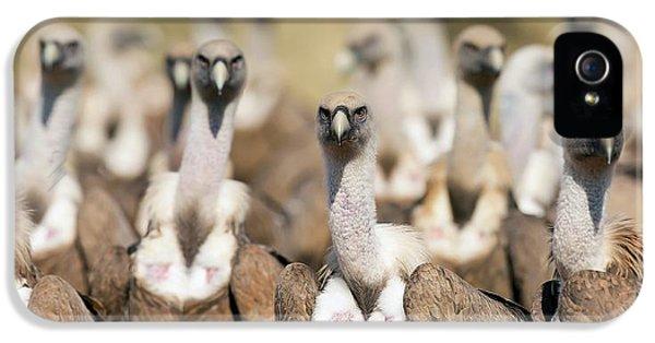 Griffon iPhone 5s Case - Griffon Vultures by Nicolas Reusens