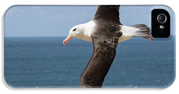 Albatross iPhone 5s Case - Black-browed Albatross (thalassarche by Martin Zwick