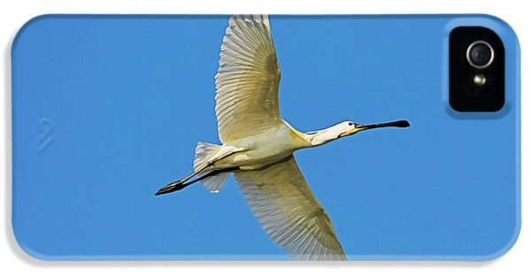 Eurasian Spoonbill Or Common Spoonbill IPhone 5s Case