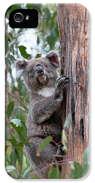 Koala (phascolarctos Cinereus IPhone 5s Case by Martin Zwick