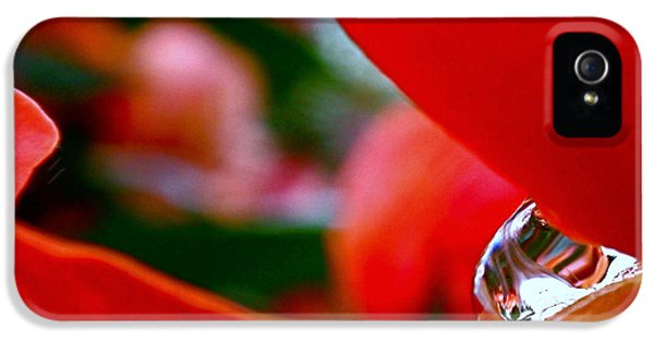 Roses After The Rain IPhone 5s Case by Rona Black