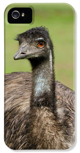 Emu iPhone 5s Case - Australia, Adelaide by Cindy Miller Hopkins