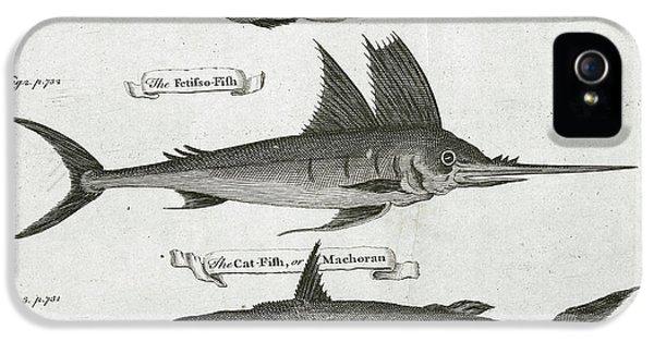Fish IPhone 5s Case