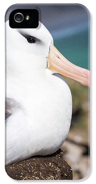 Black-browed Albatross (thalassarche IPhone 5s Case by Martin Zwick