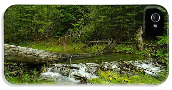 A Beaver Dam Overflowing IPhone 5s Case by Jeff Swan